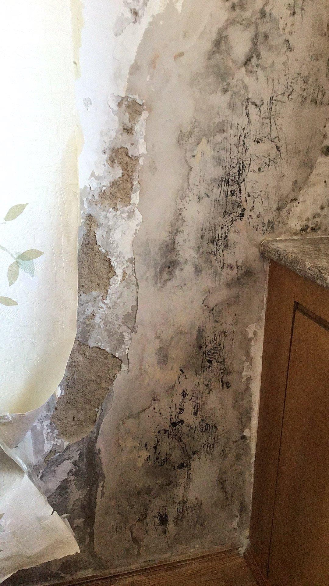 墙体发霉严重,怎么处理
