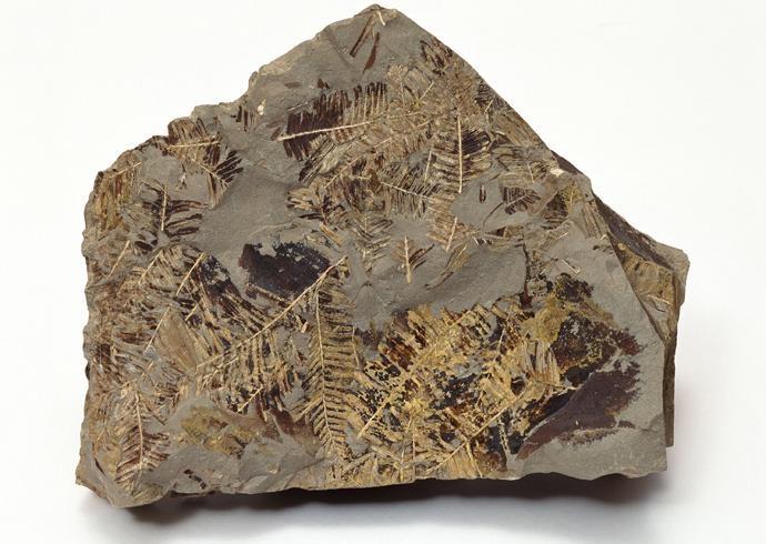化石贴图材质素材图片【767】
