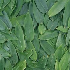 植物材质图片贰柒陆