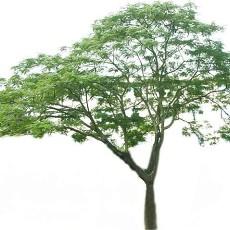 特色树木图片材质图片零零壹