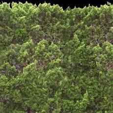 树叶堆贴图
