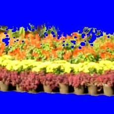 花坛素材材质图片零贰肆