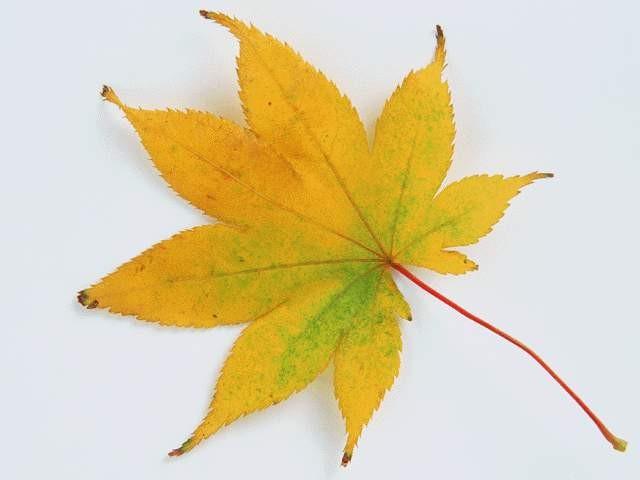 树叶图片肆捌3dmax材质