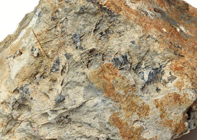 化石贴图材质素材图片【770】