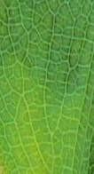 树叶图片贰