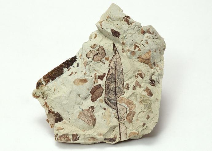 化石贴图材质素材图片【768】