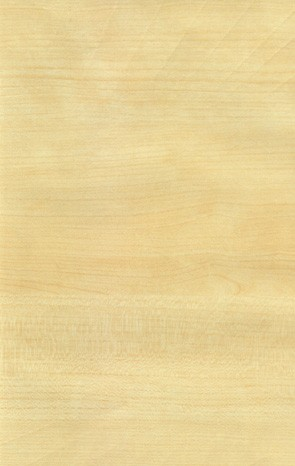 枫木-壹零材质图片