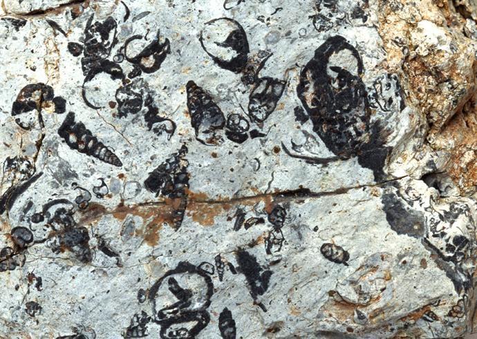 化石贴图材质素材图片零玖柒