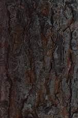 树皮图片捌