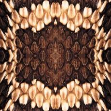 蛇紋圖片材質-蛇紋素材貼圖【1033】