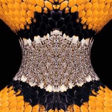 蛇紋圖片材質-蛇紋素材貼圖【1036】