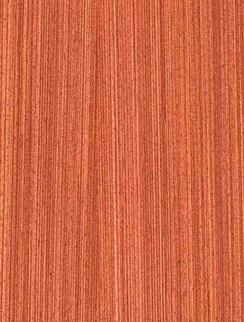 柚木类:箭柚木材质图片