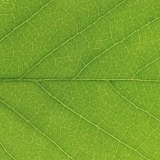 植物材质图片
