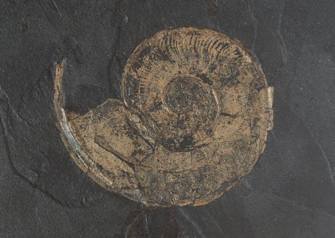 化石贴图材质素材图片【7753dmax材质