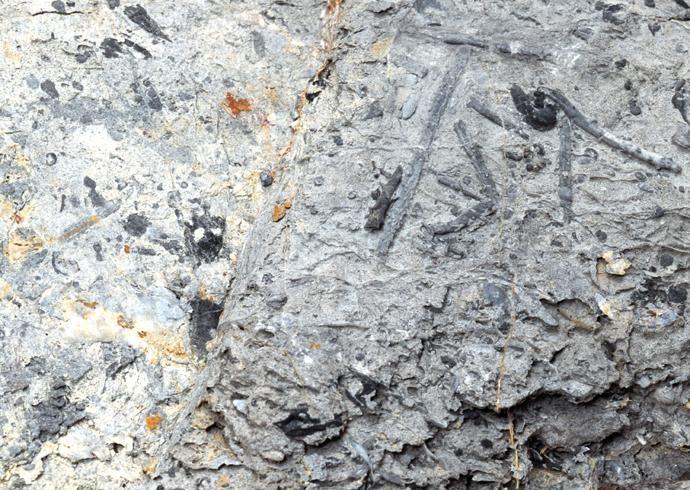 化石贴图材质素材图片【765】