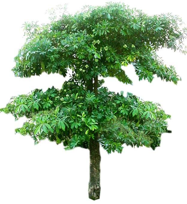 特色树木图片材质图片零捌伍