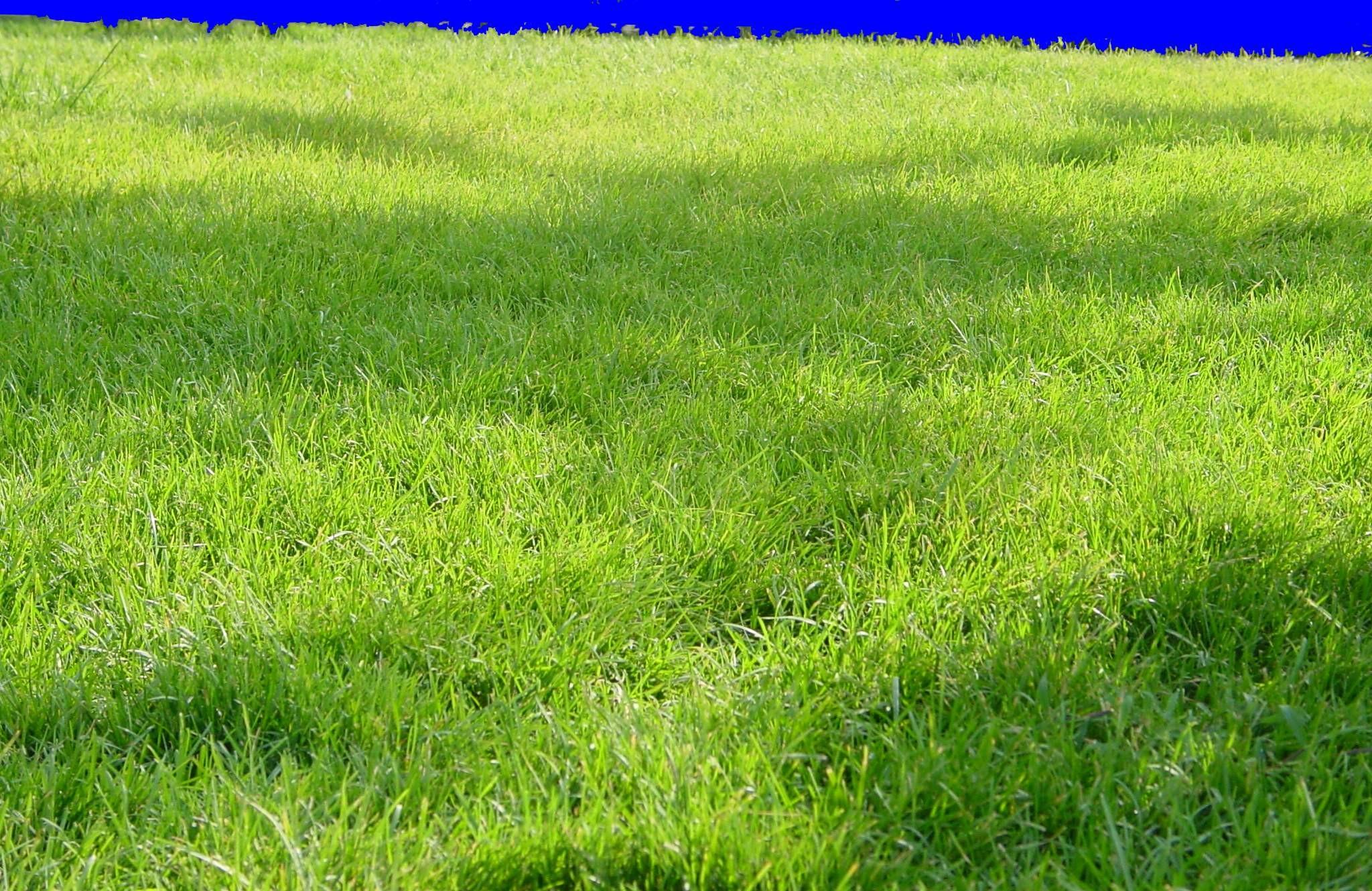 草皮贴图图片材质零捌陆