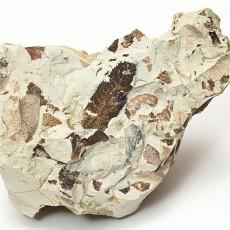 化石贴图材质素材图片【779】