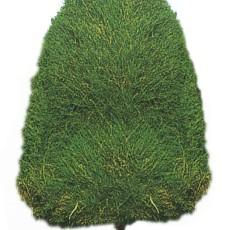 特色树木图片材质图片零柒叁