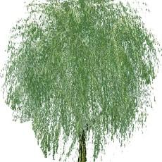 特色树木图片材质图片零肆伍