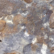 化石贴图材质素材图片【761】