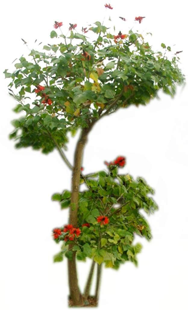 特色树木图片材质图片零玖叁