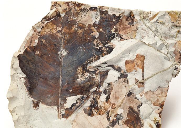 化石贴图材质素材图片【778】