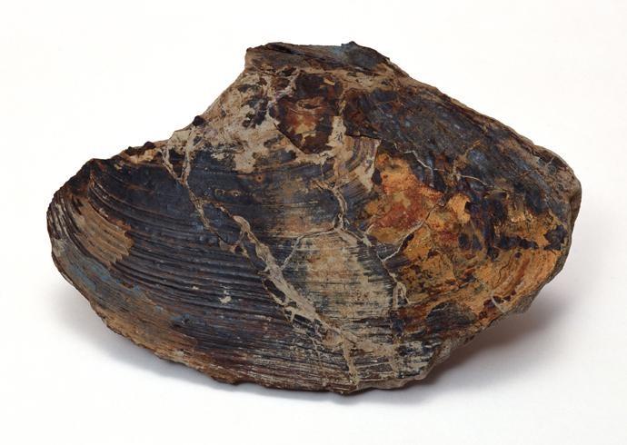 化石贴图材质素材图片【766】