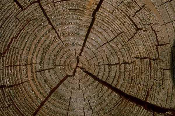 其它木纹壹捌玖素材图片