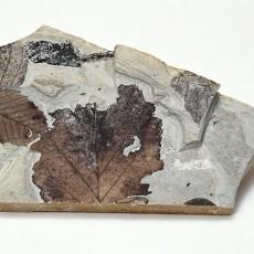 化石贴图材质素材图片【782】