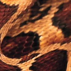 蛇紋圖片材質-蛇紋素材貼圖【1034】