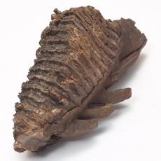 化石贴图材质素材图片【786】
