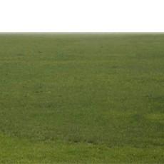 草坪贴图图片材质零陆陆