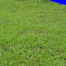 草皮贴图图片材质