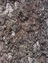 树皮图片壹贰