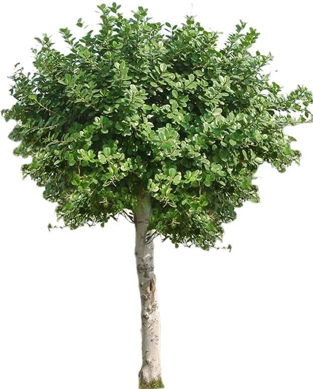 特色树木图片材质图片零贰叁