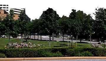 树材质图片零贰叁