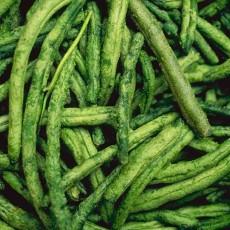 植物材质图片零零陆