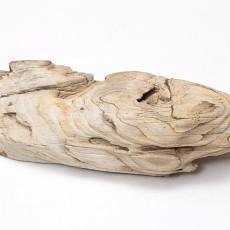 化石贴图材质素材图片【788】