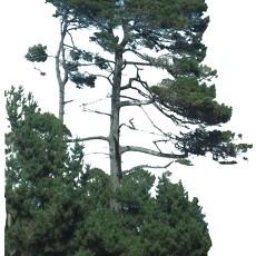 单棵树图片材质贴图贰贰肆