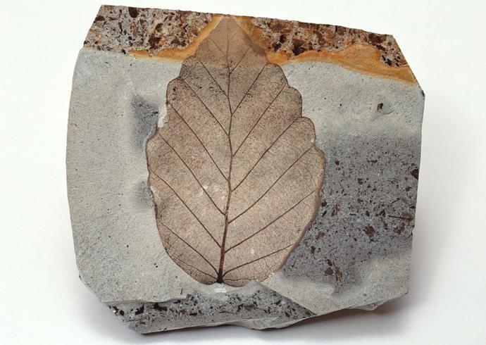 化石贴图材质素材图片【769】
