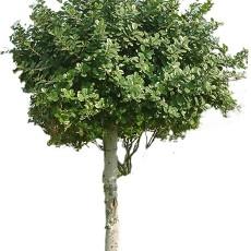 树木图片材质贴图