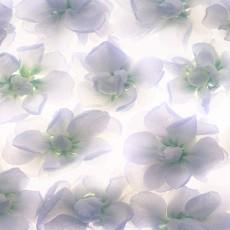 植物材质图片零肆肆