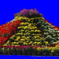 花坛素材材质图片零贰陆
