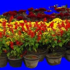 花坛素材材质图片零零玖