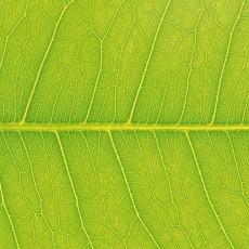 植物材质图片贰肆肆