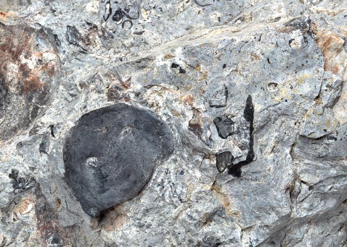化石贴图材质素材图片【764】