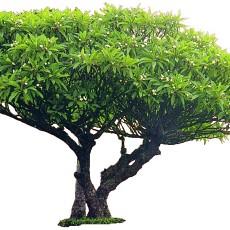 单棵树图片材质贴图贰伍贰