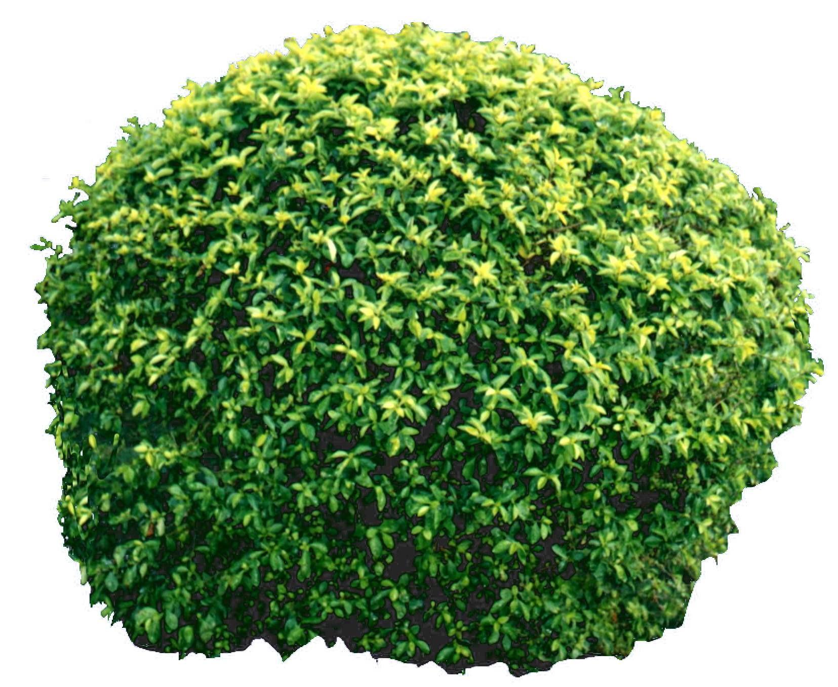 灌木贴图材质图片贰零零3dmax材质
