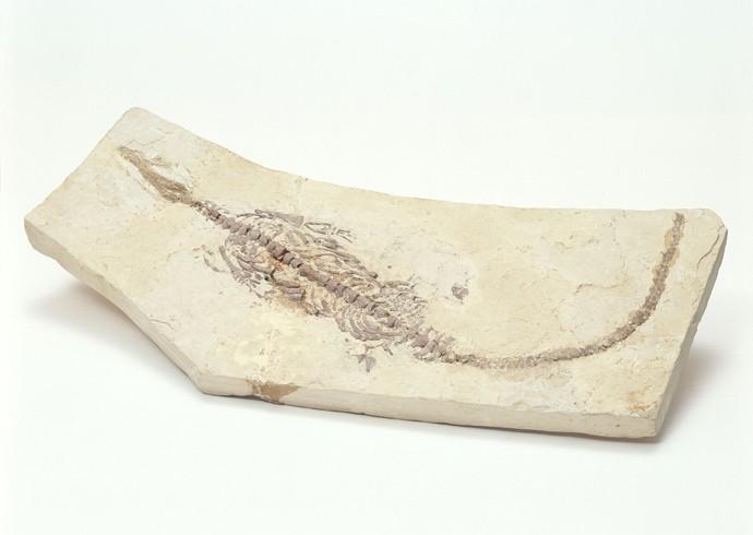 化石贴图材质素材图片【737】